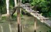 বানারীপাড়ায় আয়রন ব্রিজের পরিবর্তে সুপারি গাছের সাঁকো!
