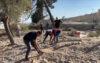 আল-আকসায় ফিলিস্তিনি শহিদদের কবরস্থান গুঁড়িয়ে দিল ইসরাইল